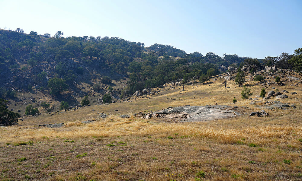 Large open plain with dry grass, rocks and trees in background