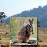 Large hilly area with rocks, grass and trees. Wallaby image overlayed.
