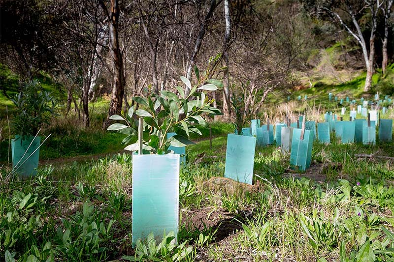Young trees planted recently with outside protection