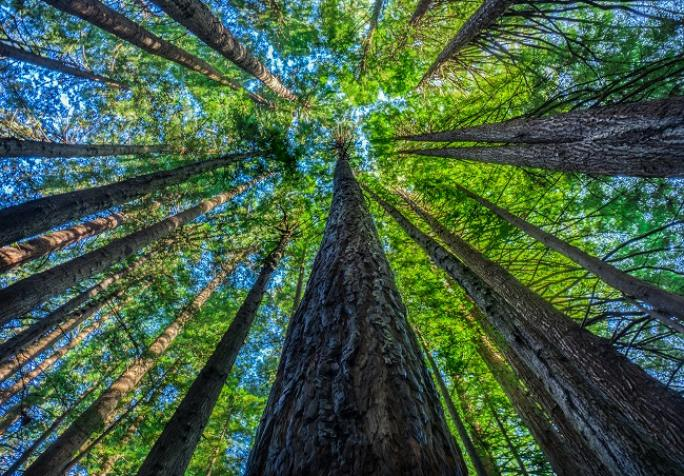 Grow your business by being climate positive with reforest
