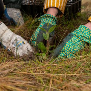 Hands reforesting by planting trees at Widgewah Sanctuary